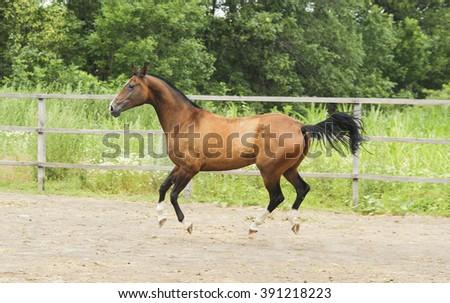 Light brown horse running - photo#10