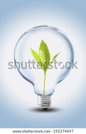Light Bulb with green plant sprout inside, concept for Go Green and ecology