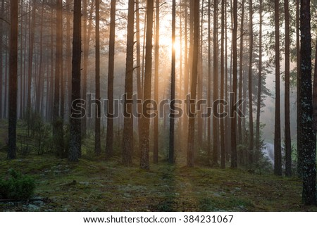 Light rays in forest in foggy morning in countryside