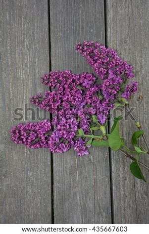 Lilac branch on wood