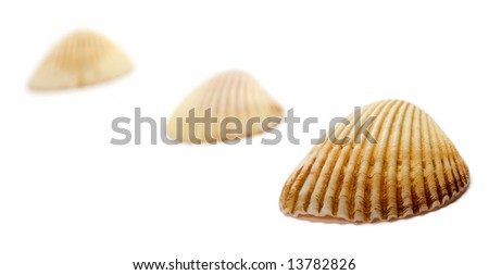 Line of sea shells isolated on white background