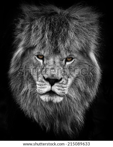 lion portrait in black and white with color eyes