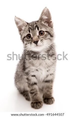little beautiful kitten grey brown sits on a white background