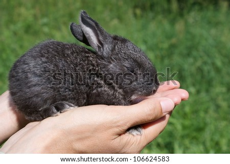 Little Bunny on the open hands of man, against the background of green grass