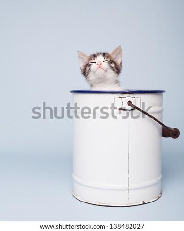 stock-photo-little-cute-kitten-inside-a-white-bucket-sleeping-on-blue