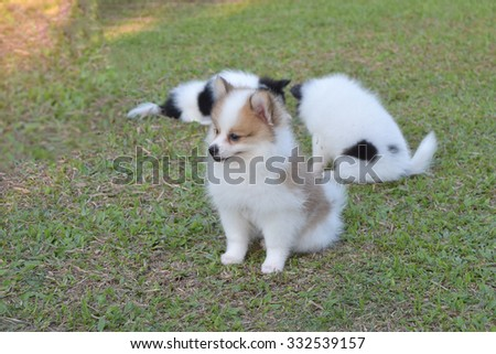 Little cute puppies in front yard at country home