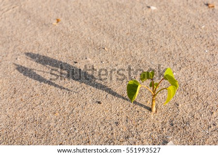 Little green tree in lighting morning time on beach with its shadow