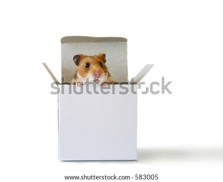 Little hamster sitting inside a box