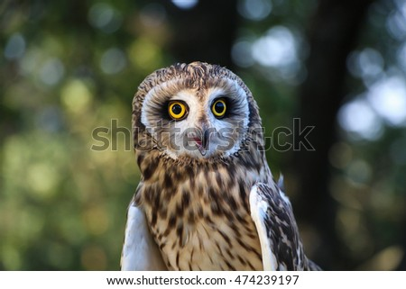 little owl in the forest