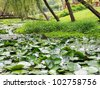 little pond - stock photo