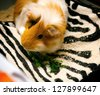 little red-haired hamster is in a cage, eating and relaxing in the hammock - stock photo