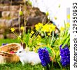 Living Easter bunny with eggs in a basket on a meadow in spring - stock photo