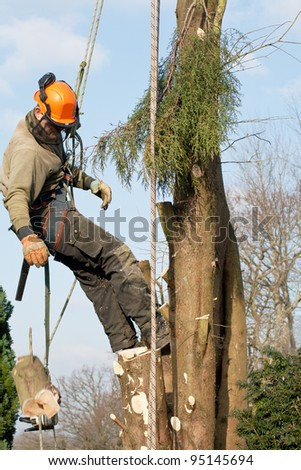 Log (moving !) and chainsaw being lowered by a man felling a tree