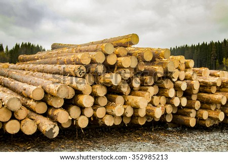 Logs are storing in the sawmill area.
