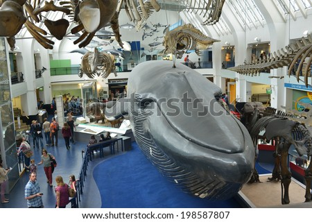 LONDON, UK - MAY 31, 2014: The interior of the Natural History Museum in London, The museum is home to life and earth science specimens comprising some 70 million items within five main collections.