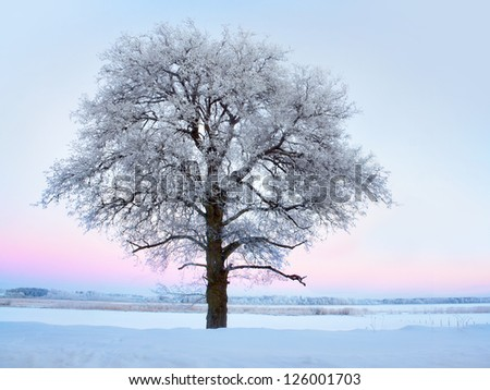 Lone tree with rime frost and snow in winter landscape with pink sky