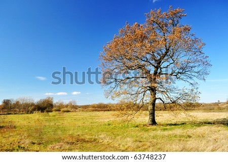 Lonely autumn oak tree in the field