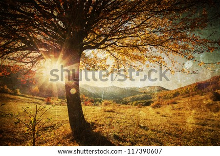 Lonely beautiful autumn tree - vintage photo