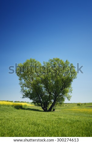 Lonely tree in the shape of a heart. Summer landscape with a willow in the field. Ukraine, Europe