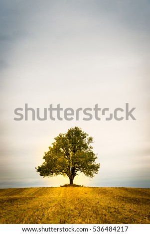 Lonely tree on a field. Fall autumn and golden colours.