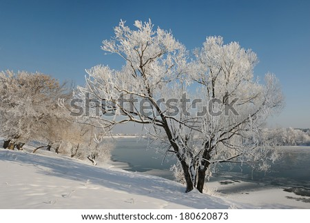 Lonely winter tree covered with frost near river