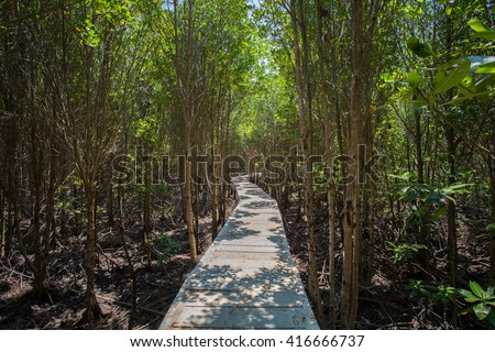 Long wood bridge in mangrove forest, Thailand