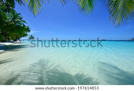 Look tropical beach under palm trees