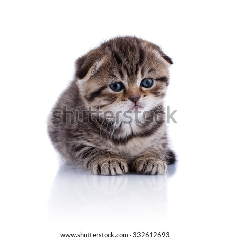 Lop-eared kitten on a magnificent white background.
