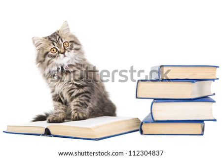 Lovely grey persian kitten sitting with pile of books on isolated white background