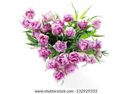 lovely pink tulips - flowers and plants