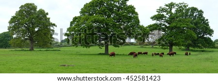 Lovely scene of cows under trees in a meadow