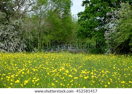 Lovely view of spring flowers in a meadow with background bridge