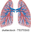 lungs of the person - stock photo