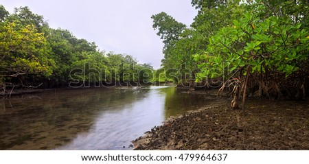 Lush Florida mangroves on a brackish creek at dusk