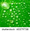 Macro detail of water drops on green leaf - stock photo