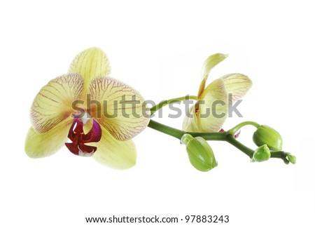 Macro of a beautiful orchid