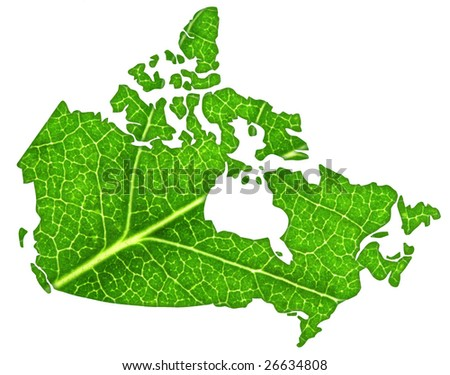 Macro of a green leaf cut out in the shape of Canada.