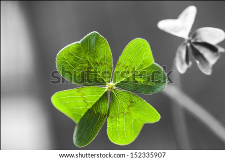 macro of a 4 leaf clover with shadow and some blurs