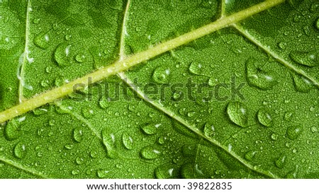 Macro of green tree leaf