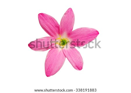 Macro of pink flower on white background