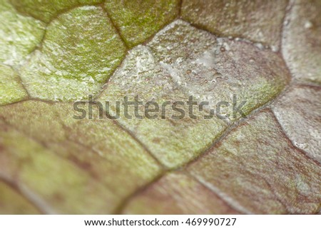 Macro of plant leaf texture surface green color in nature use for background