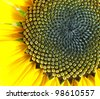 Macro of Sunflower Detail - stock photo