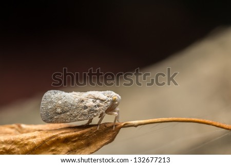 Macro Photo Of A Plant-hopper
