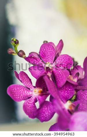 Macro photo of an orchid with shallow depth of field.