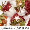 Macro photo of four mouldy strawberries covered in white fungus and decaying - stock photo