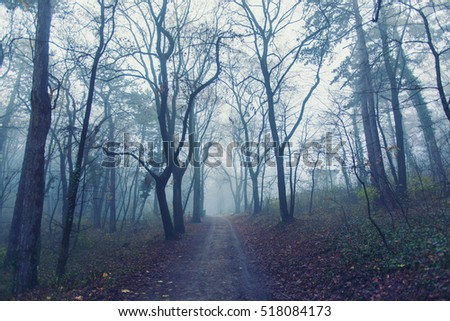 Magical foggy seasonal forest tree landscape. Lovely dreamy fairytale.