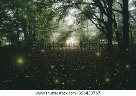 magical lights in forest