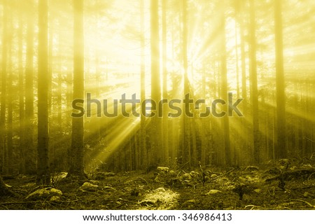 Magical sun rays in forest landscape. Lovely sunny gold color filter used.