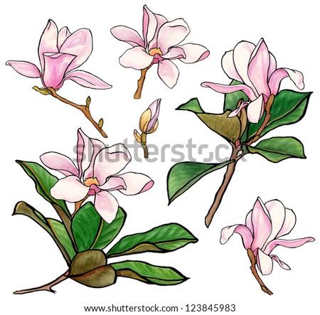 magnolia blossom clip art - photo #35
