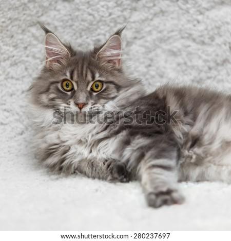 kitten on beach sand stock photo 455516377  shutterstock